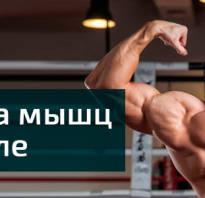 Упражнения в тренажере для спины