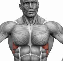 Передняя зубчатая мышца упражнения