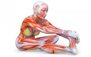 Упражнения для быстрой растяжки