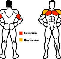 На какие мышцы упражнение на брусьях